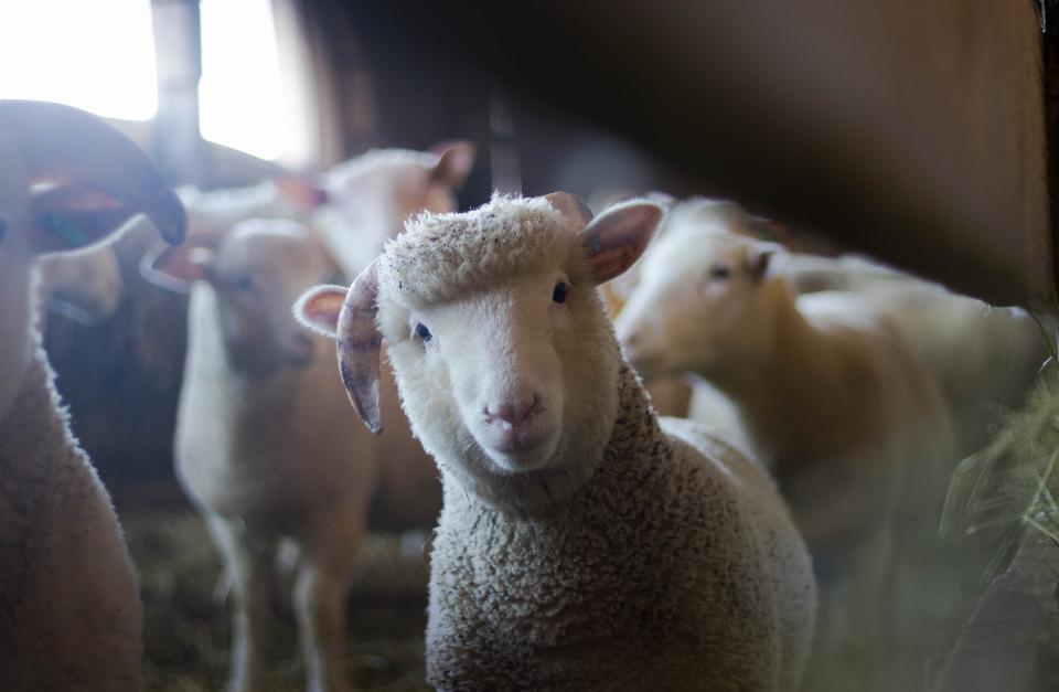 animal-farm-paper-topics